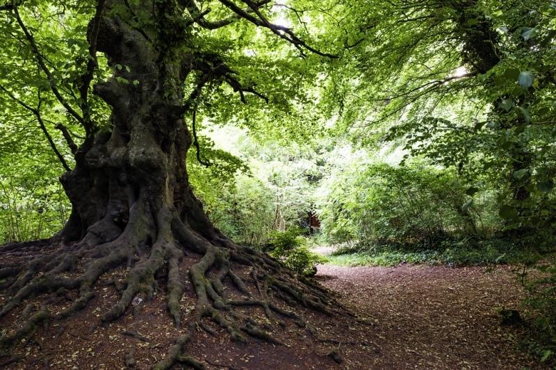 balrath woods